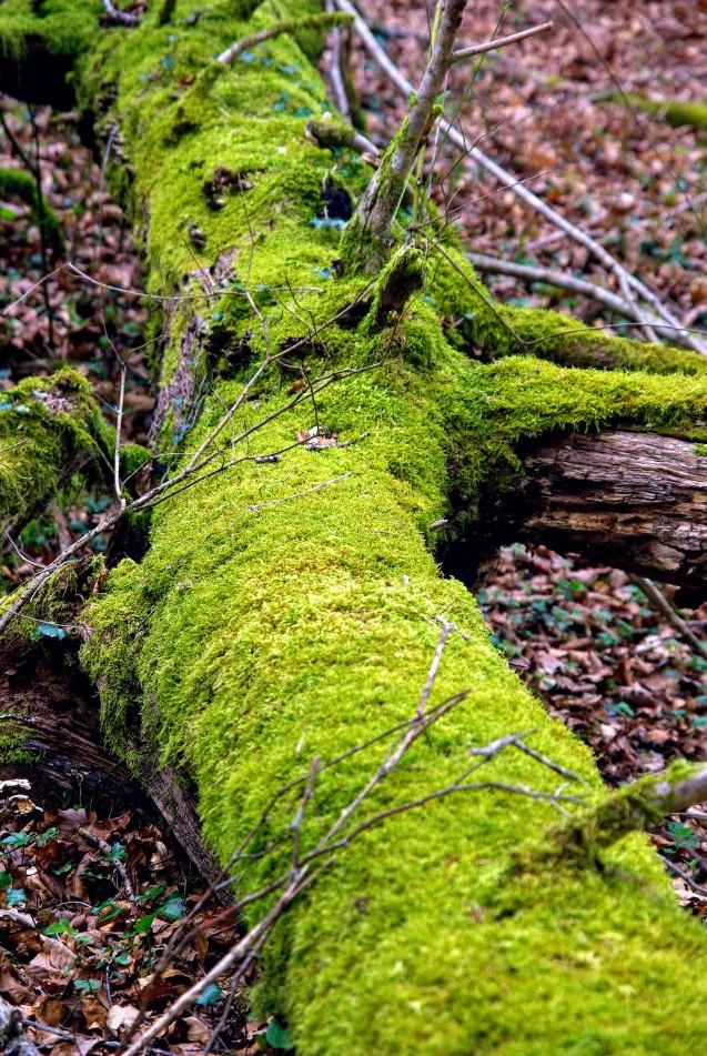 Bosque, árbol