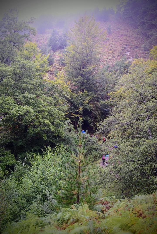 Bosque, paisajes, Bizkaia, españa, spain, forest,