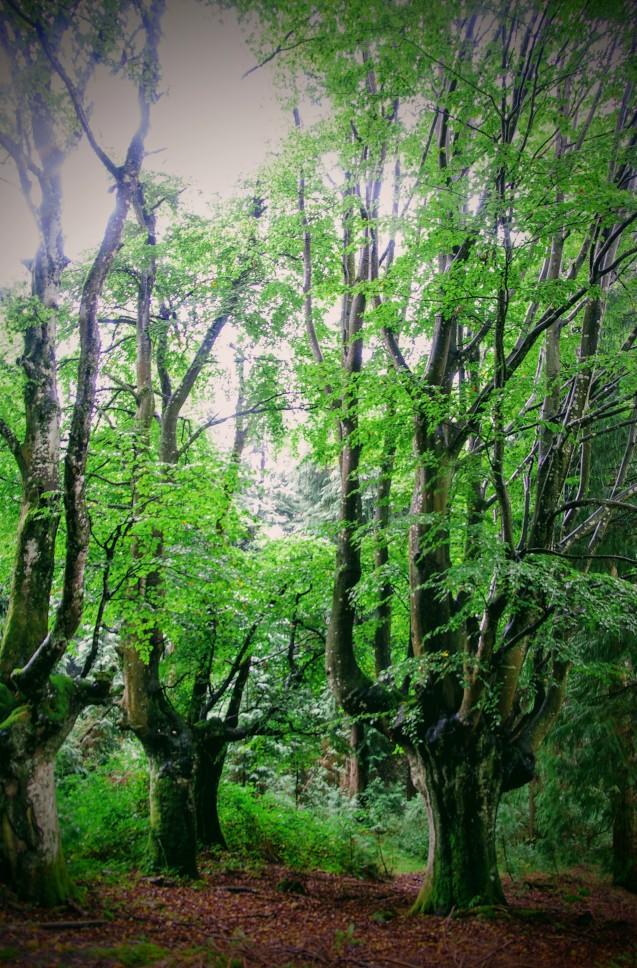 Bosque, paisaje, bizkaia, españa