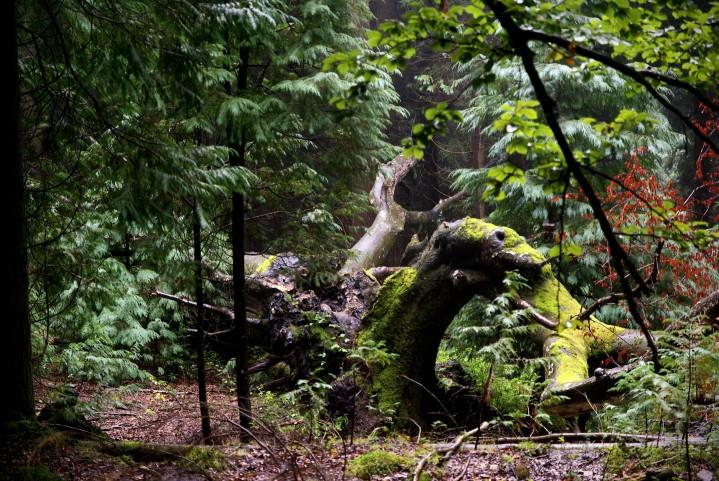 Bosque, paisajes, Bizkaia, España
