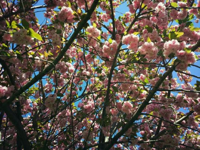 Flor, flores, campo, naturaleza