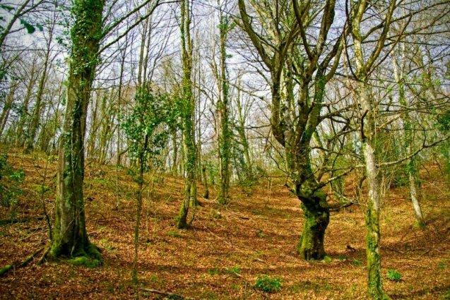 Forest-altube-otoño