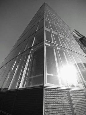 Raíces del rascacielos