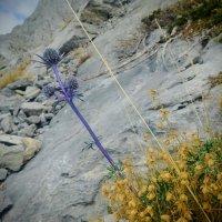La roca y sus colores.